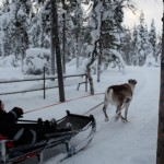 Reindeer Sleigh in Lapland