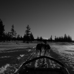 Arty husky sled photo....